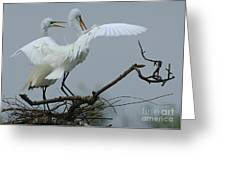 Great Egret Pair Greeting Card