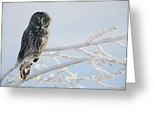 Great Grey Owl, Northern British Greeting Card