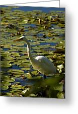 Great White Egret Perched On A Rock Greeting Card