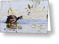 Grebe With Babies Greeting Card