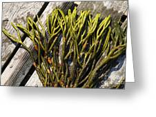 Green Fleece Seaweed Greeting Card