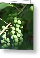 Green Grape Bunch Greeting Card