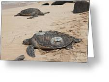 Green Sea Turtles With Gps Greeting Card