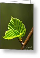 Green Spring Leaves Greeting Card by Elena Elisseeva