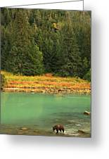 Grizzly Bear Fishing In Chilkoot River Greeting Card