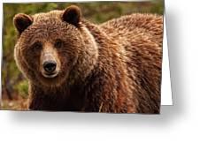 Grizzly Bear, Yukon Greeting Card