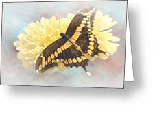 Grunge Giant Swallowtail Greeting Card