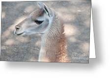 Guanaco Greeting Card