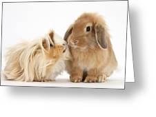 Guinea Pig And Rabbit Greeting Card