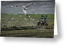 Gull Chased Tractor Greeting Card