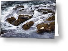 Harbor Seals Greeting Card