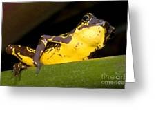 Harlequin Frog Greeting Card