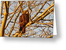 Hawk In A Tree Greeting Card