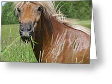 Head Of Chestnut Icelandic Horse Greeting Card