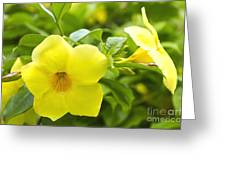 Hibiscus Greeting Card by Blink Images