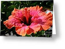 Hibiscus Blossom Greeting Card