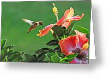 Hibiscus Hummer Greeting Card