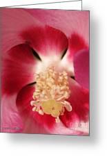 Hibiscus Moscheutos Named Luna Pink Swirl Greeting Card