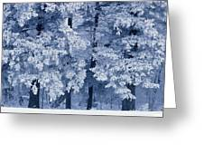 Hoarfrost On Trees In Winter, Birds Greeting Card
