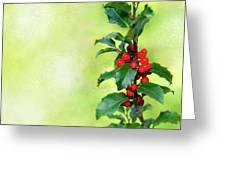 Holly Branch  Greeting Card by Carlos Caetano