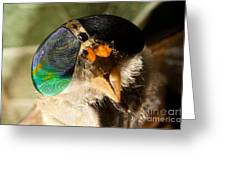 Horse Fly Greeting Card