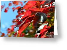 Hot Autumn Leaves Greeting Card