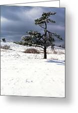 Iced Tree Shenandoah National Park Greeting Card
