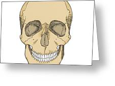 Illustration Of Anterior Skull Greeting Card