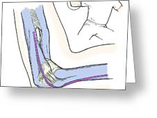 Illustration Of Elbow Ligaments Greeting Card