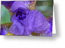Iris Square Greeting Card