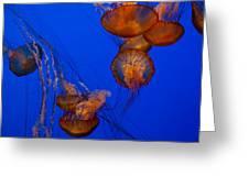 Jellyfish Dance Greeting Card