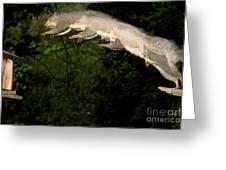 Jumping Gray Squirrel Greeting Card