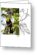 Keel-billed Toucan Greeting Card