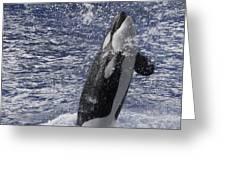 Killer Whale Greeting Card