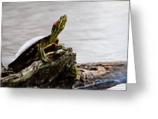 King Of The Log Greeting Card by Jason Smith