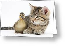 Kitten And Duckling Greeting Card