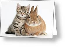 Kitten And Netherland Dwarf-cross Rabbit Greeting Card