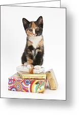 Kitten On Packages Greeting Card