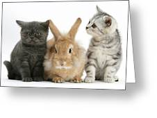 Kittens And Rabbit Greeting Card