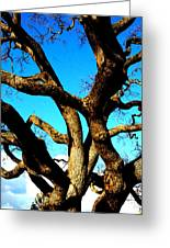 Knarled Oak Tree Greeting Card
