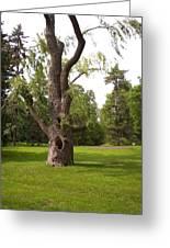 Knurled Tree Greeting Card