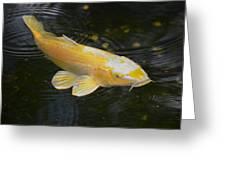 Koi In Pond Greeting Card