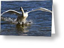 Lake Logan Landing Greeting Card