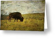 Last Buffalo   Greeting Card