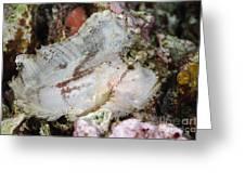 Leaf Scorpionfish, Indonesia Greeting Card
