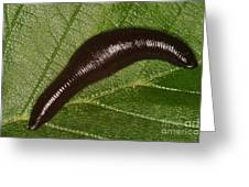 Leech Greeting Card