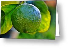 Lemon On Tree Greeting Card