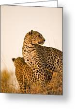 Leopard Panthera Pardus, Arathusa Greeting Card