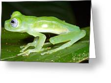 Limon Giant Glass Frog Greeting Card