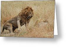Lion Greeting Card by Alan Clifford